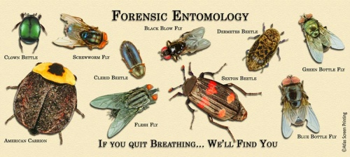 Forensics Science Olympiad Student Center Wiki – Forensic Entomology Worksheet
