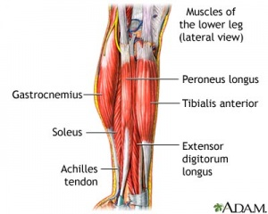 Lower Leg Muscle Building Exercises